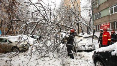 Photo of Trafic blocat complet. Un copac s-a prăbușit peste o mașină în centrul Capitalei
