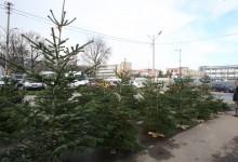 Photo of După Sectorul 6, alte 2 primării de sector din București anunță că vor ridica brazii de Crăciun
