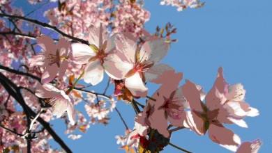 Photo of Cum va fi vremea de Florii, la fel o să fie și de Paști. Prognoza meteo pentru București