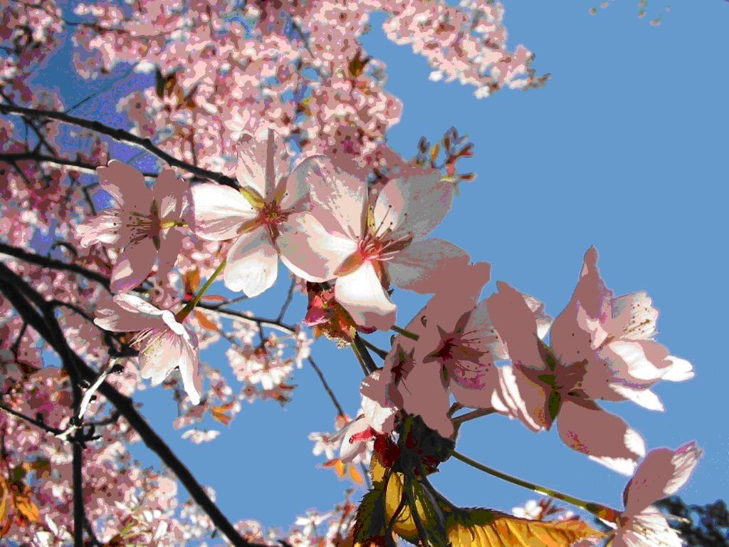 Cum va fi vremea de Florii, la fel o să fie și de Paști. Prognoza meteo pentru București