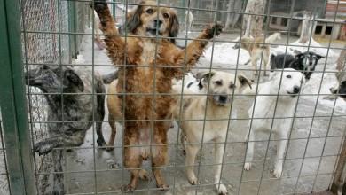 Photo of Primăria Sectorului 1 anunță deschiderea a patru centre de sterilizare a câinilor fără stăpân
