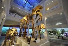 Photo of Noaptea Muzeelor 2021. Antipa pregătește o ediție specială, online