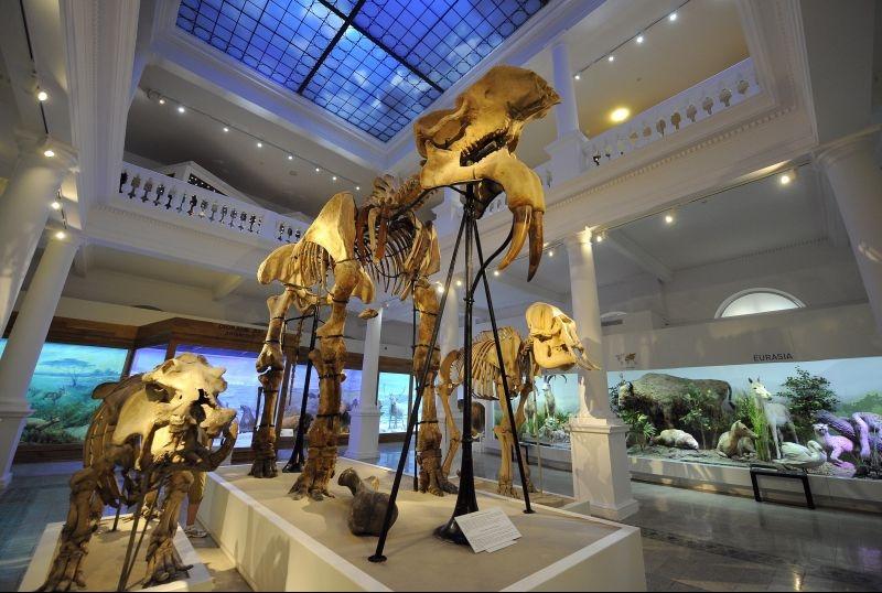 Noaptea Muzeelor 2021. Antipa pregătește o ediție specială, online