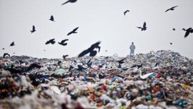 Photo of Ministrul Mediului, apel la bucureșteni să nu mai arunce gunoaie pe câmp: Nu putem controla noi cât pot arunca cetățenii