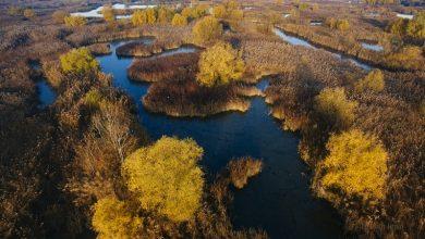 Photo of Apel important semnat de 29 de ONG-uri pentru protecţia Parcului Natural Văcăreşti