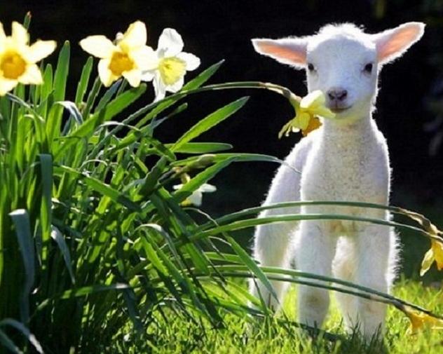 Vremea de Paște și 1 Mai. ANM transmite cum va fi prognoza meteo pentru următoarele două săptămâni