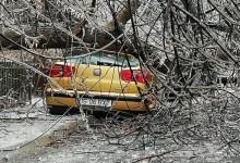 Photo of Ce poți face dacă ți-a căzut un copac pe mașină, în București