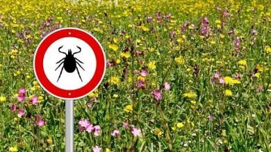 Photo of Începe acțiunea contra căpușelor și țânțarilor în București. Primarul Capitalei a făcut marele anunț
