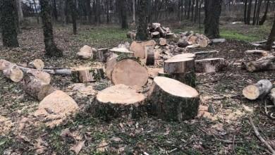 Photo of Un copac se taie ilegal la fiecare trei zile în București. Acest lucru duce la grave probleme de sănătate