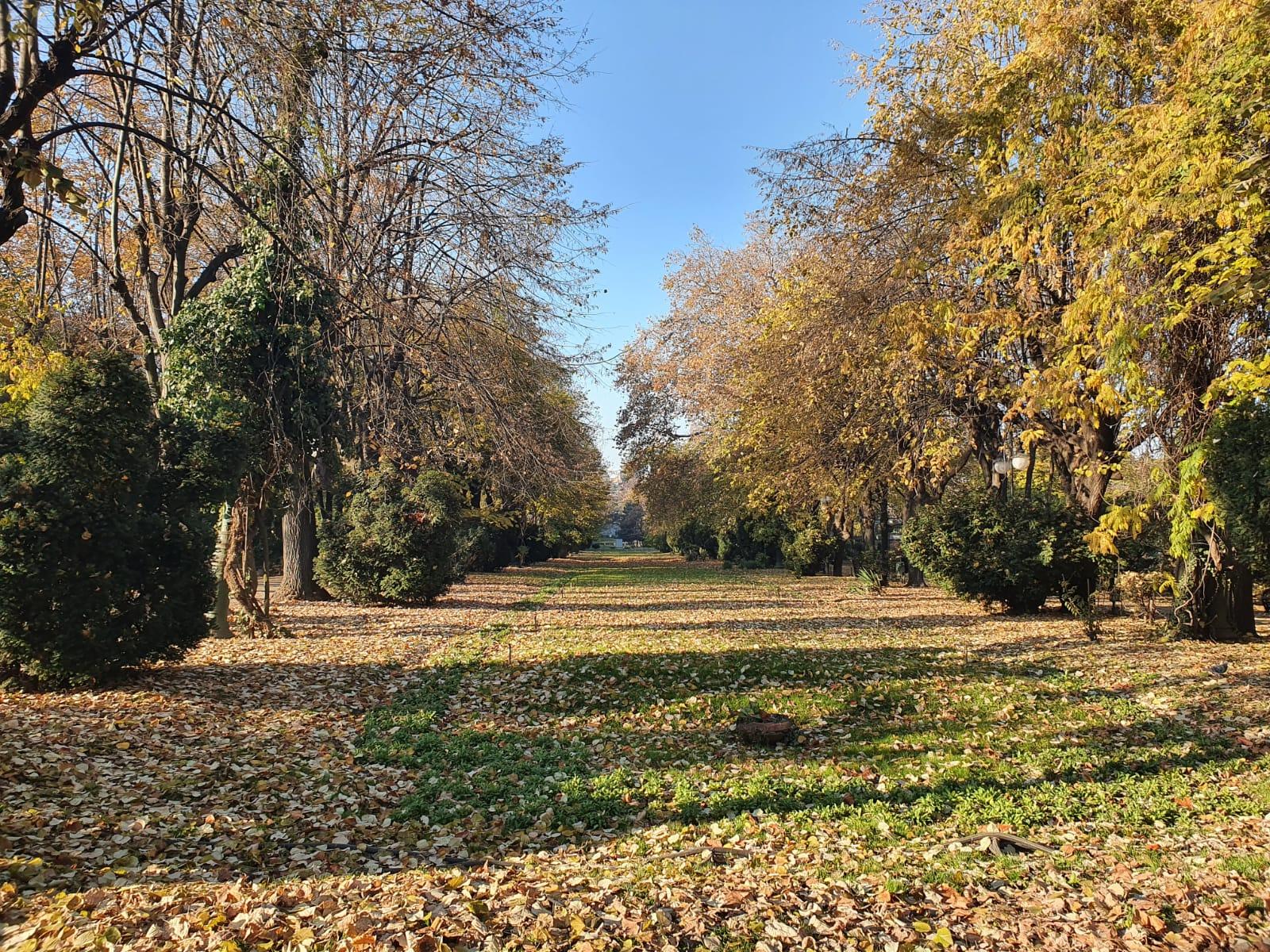 drum toamna in Parcul Cismigiu plancat de copaci