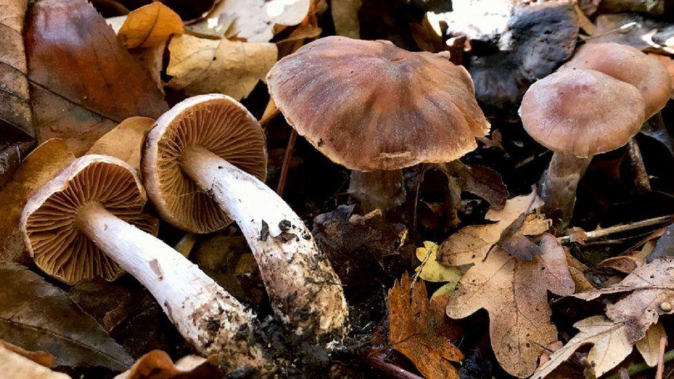 Unul dintre cele șase specii noi de fungi descoperite în Marea Britanie