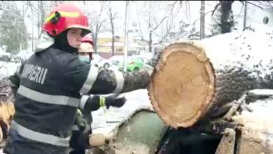 Photo of Ce se întâmplă când ninge în București (în afară de trafic și mai neplăcut)? Ați ghicit: cad copaci pe mașini