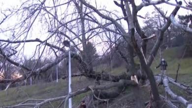 Photo of Pericol uriaş în centrul Bucureștiului! Un copac s-a prăbuşit în Parcul Tineretului