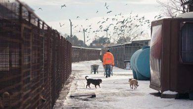 Photo of Sute de câini, victime colaterale în scandalul dintre Clotilde Armand și Romprest: Războaiele dvs politice vor duce la pierderi de vieţi