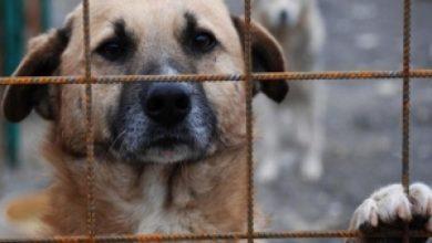 Photo of Primăria Capitalei preia adăpostul Odăi și se va ocupa de îngrijirea celor 750 de câini fără stăpân