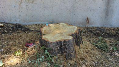 """Photo of Cea mai mare amendă pentru tăierea unui copac în București! I-a """"defrișat"""" de 10.000 lei"""