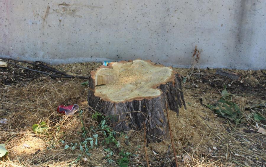 Amendă pentru tăierea unui copac în București