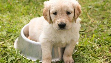 Photo of Avantajele pe care le ofera achizitia hranei pentru animale din petshop online