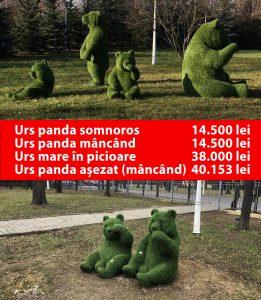 ursii panda