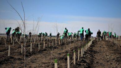 Photo of Începe campania de împăduriri de primăvară. Romsilva va planta circa 20 milioane de puieți forestieri