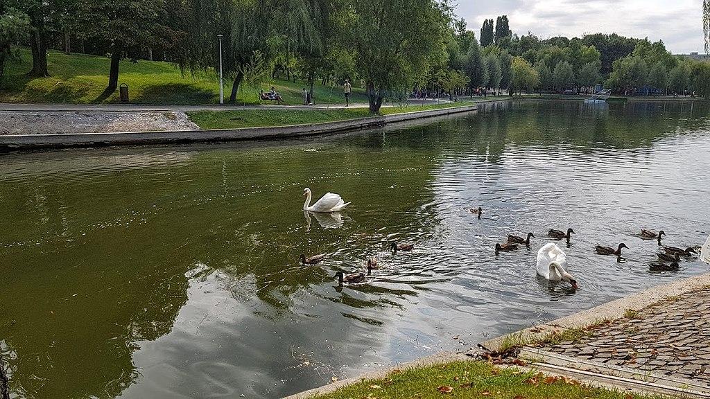 Apa lacului din parcul IOR este roșie