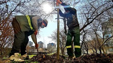 Photo of 2.000 de pomi vor fi plantați în Sectorul 4