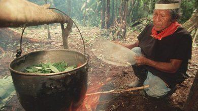 """Photo of Drog folosit în ritualurile șamanice, testat de medici pentru """"resetarea"""" oamenilor cu depresii. Cum funcționează"""
