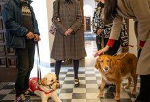 Photo of Câinii ghizi pentru persoanele nevăzătoare, în vizită la Primăria Sectorului 1