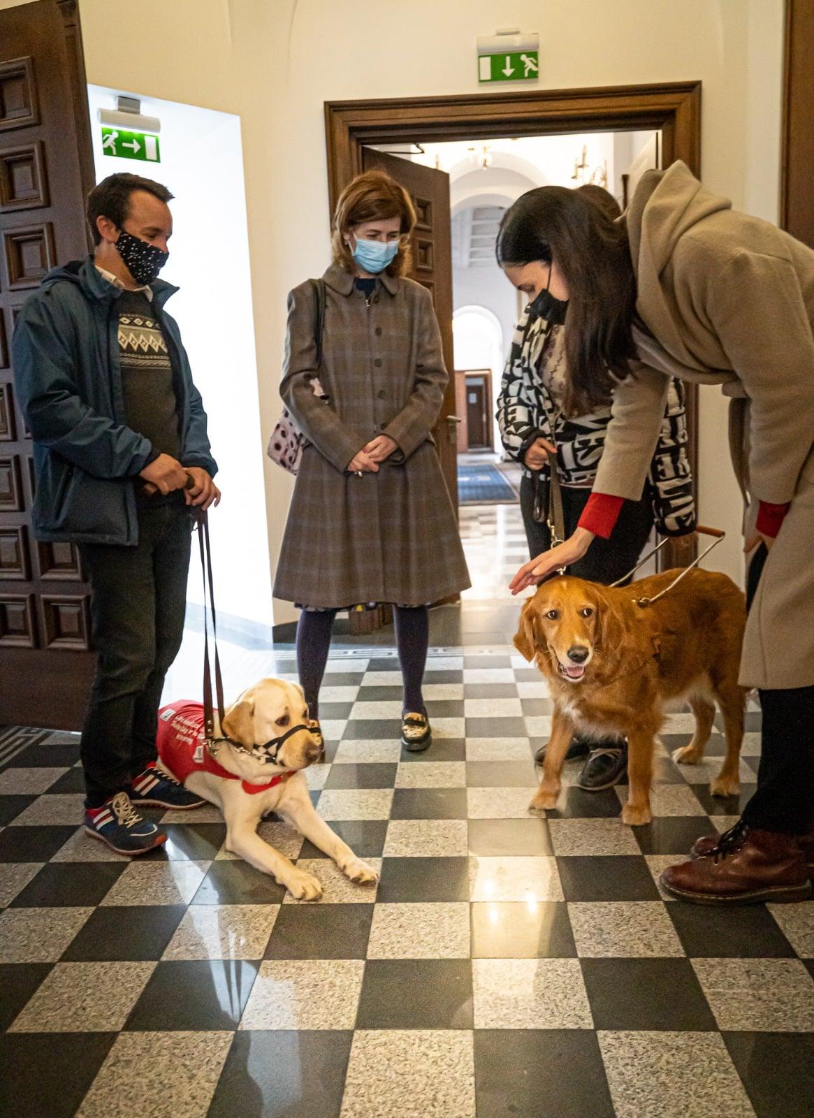 Câinii ghizi pentru persoanele nevăzătoare, în vizită la Primăria Sectorului 1