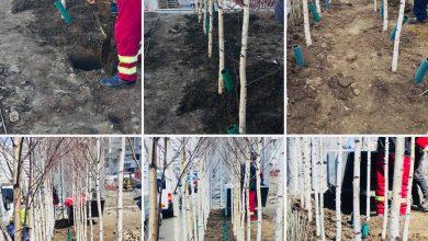Photo of Bucureștiul se înverzește. Încă 6.000 de copaci plantați primăvara aceasta în Sectorul 3