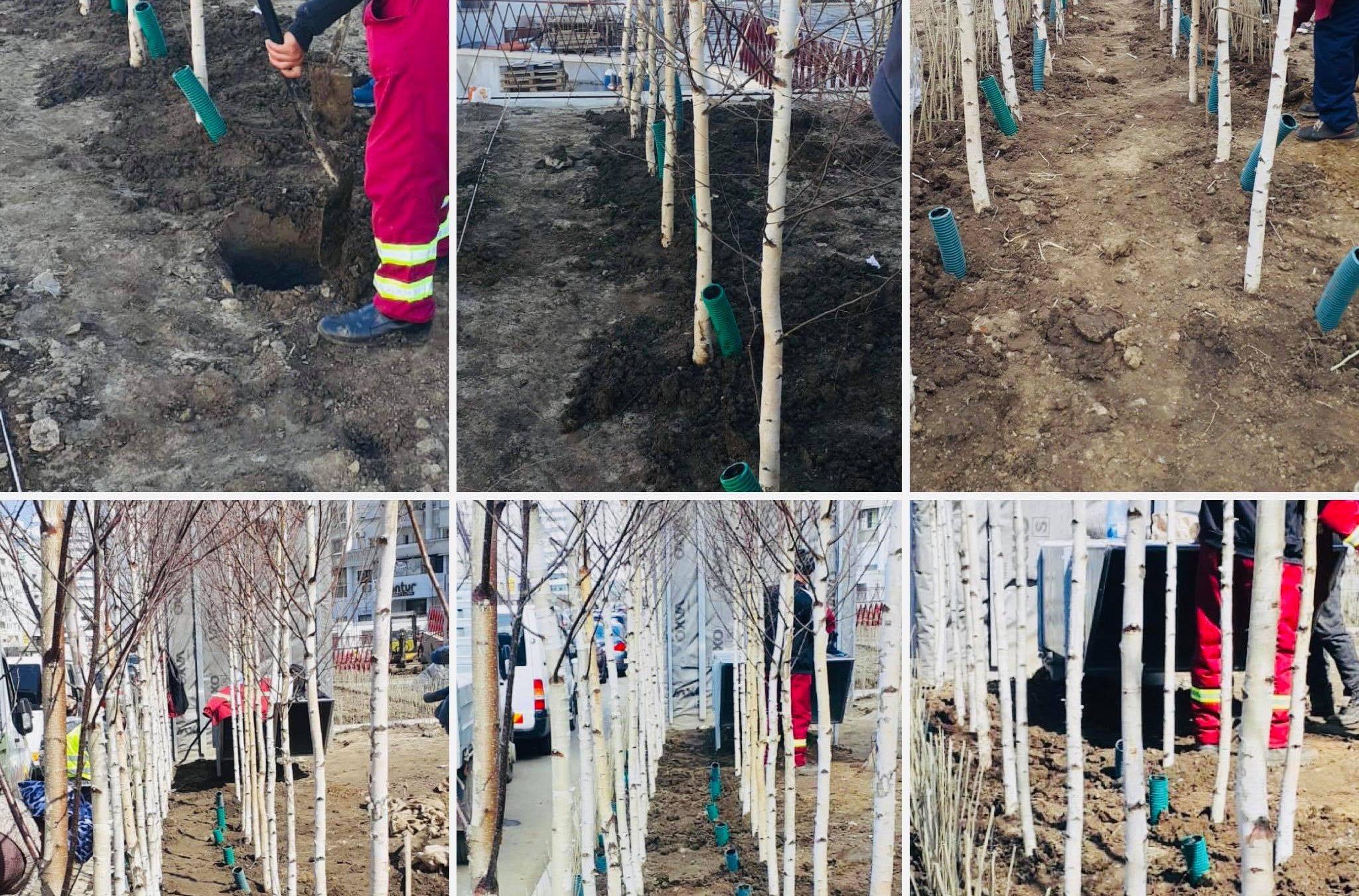 6.000 de copaci plantați primăvara aceasta în Sectorul 3