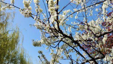 Photo of Vremea pentru luna aprilie. La ce să ne așteptăm de Paște și 1 Mai