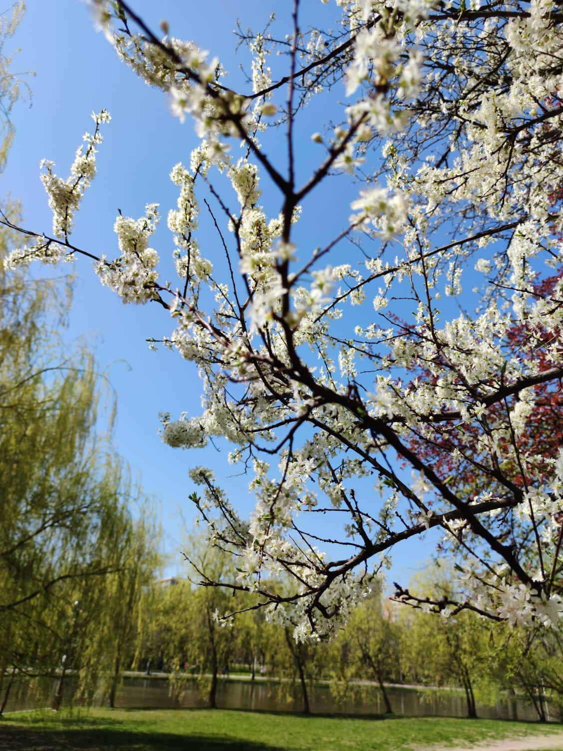 Vremea pentru luna aprilie. La ce să ne așteptăm de Paște și 1 Mai