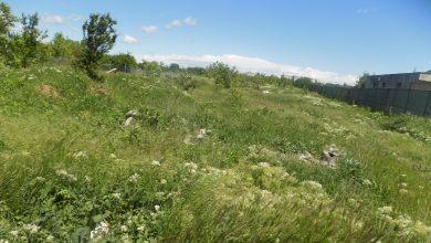 Photo of Amenzi pentru proprietarii de terenuri care nu curăță ambrozia în Sectorul 5