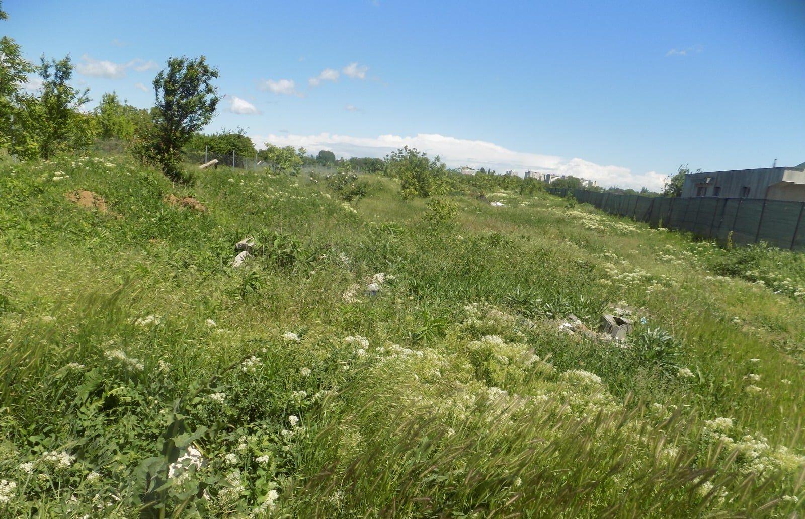 amenzi pentru proprietarii de terenuri care nu curăță ambrozia