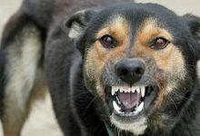 Photo of Câini fără stăpân ridicați de ASPA în Sectorul 3