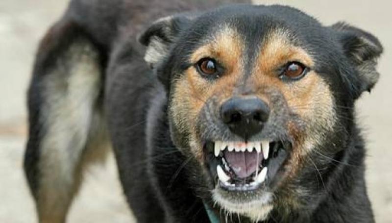 Câini fără stăpân ridicați de ASPA în Sectorul 3