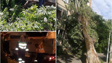 Photo of În București, când bate vântul, plouă cu copaci. Zeci de mașini avariate, aproape 160 de pomi doborâți