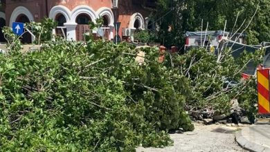 Photo of Vânt puternic în București. Zeci de copaci căzuți în Capitală, pompierii sunt în alertă