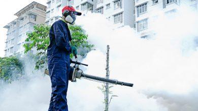 Photo of Șobolanii și țânțarii din București pot răsufla ușurați: avem buget de deratizare, dar e prea mic. Administratorul companiei care ar trebui să-i distrugă a demisionat