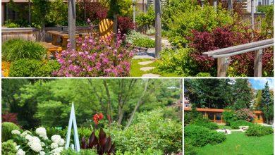 Photo of Primarul Ciprian Ciucu propune un program pentru revitalizarea grădinilor de bloc din Sectorul 6