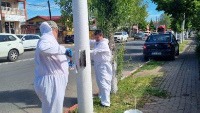 """Photo of Pandele face orașul lună! Primăria Voluntari s-a apucat de o acțiune """"de curăţare şi igienizare a stâlpilor de iluminat"""""""