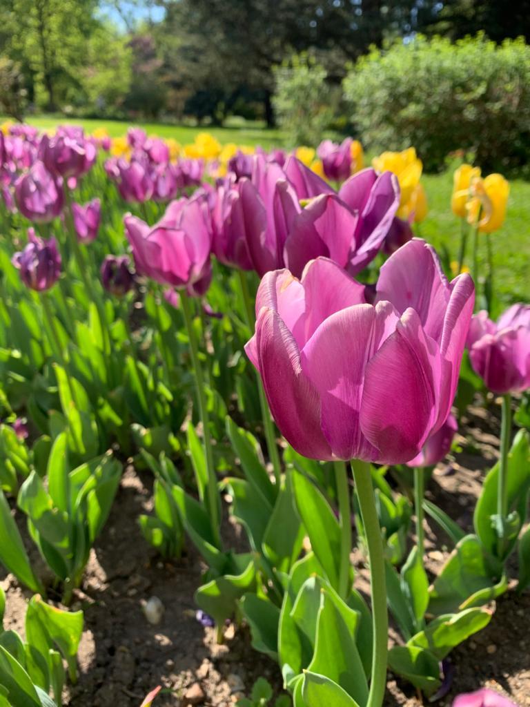 Vremea pentru luna mai. Zilele călduroase alternează cu zile reci și ploioase