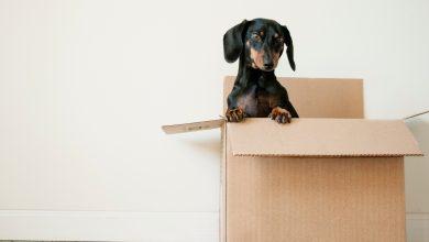 Photo of Recomandări înainte de a te muta în noul apartament dacă nu mai dispui de bani (P)