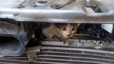 Photo of Poliția Locală a salvat un pui de pisică blocat în scutul unei mașini