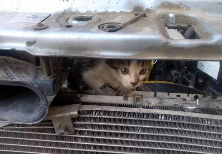 Poliția Locală a salvat un pui de pisică