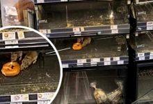 Photo of Petrecerea șobolanilor din supermarketul Mega Image, amendată drastic. ANSVSA a intervenit în scandalul devenit viral