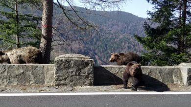 Photo of Se redeschide circulația pe Transfăgărășan. Traficul va fi permis doar ziua, pericol mare de urși