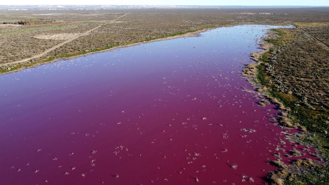Un lac din Patagonia a devenit roz
