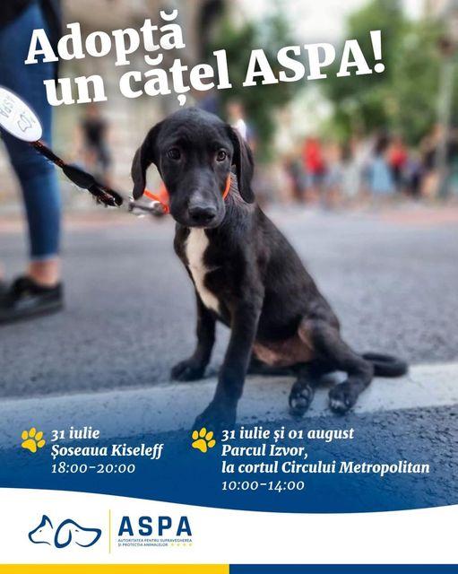 poți adopta un cățel în București